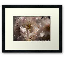 Hello Blossom  Framed Print