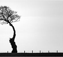Reluctant Tree by Alan Robert Cooke