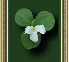 "☸•°*""˜TRILLIUM ~STATE FLOWER OF ONTARIO CANADA WITH SCRIPTURE PLZ READ DESCRIPTION TY˜""*°•☸  by ✿✿ Bonita ✿✿ ђєℓℓσ"