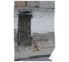 Old Door in a Wall With a Stray Dog Poster