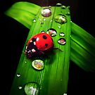 Lady Bug ipad by Cliff Vestergaard
