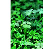 Clover Stay Photographic Print