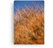 Contrast wow  Canvas Print