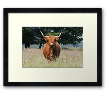 Highland Cattle 1 Framed Print