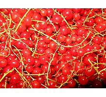 red currant Photographic Print