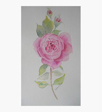 Rose toujours Photographic Print