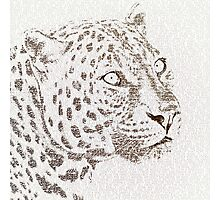The Intellectual Leopard Photographic Print