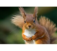 Cute Red Squirrel Photographic Print