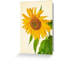 Vintage Sunflower Greeting Card