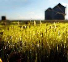The LOW DOWN.....(Little Moss On The Prairie) by WildestArt