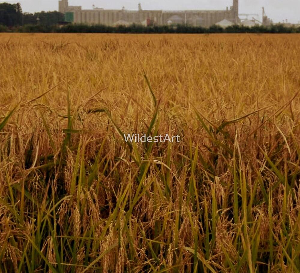 King Rice by WildestArt