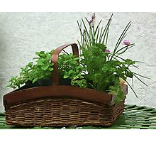 Herbal Basket Photographic Print
