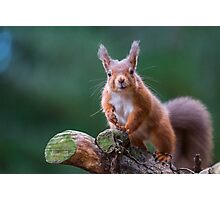 Red Squirrel in forest Photographic Print