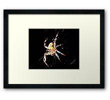 Web Weaver Framed Print