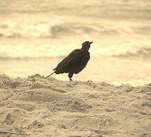 Beach Bird by Christine Demaray-Brown