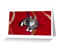 Princess Bella Greeting Card