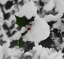 A Cold Winter (colour splash) by jessiejoe