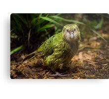 Sirocco the Kakapo Metal Print