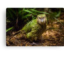 Sirocco the Kakapo Canvas Print