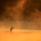 Goose Dance on Water by reindeer