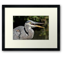Fish on the fly Framed Print