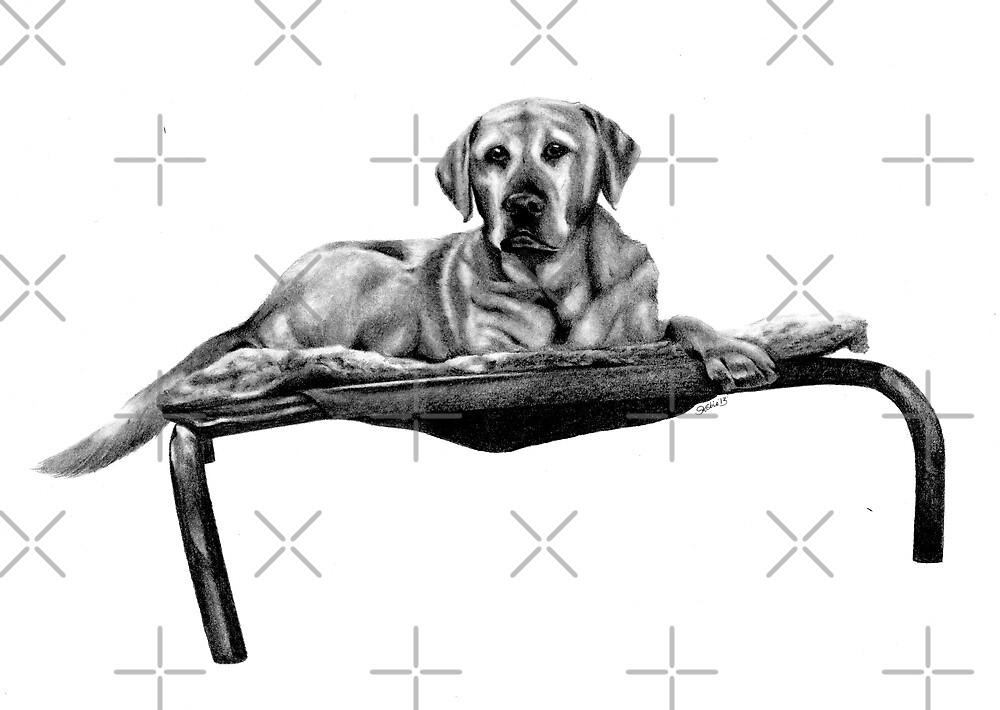 Labrador  by Kobie Notting