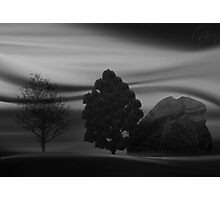©DA Concept Tree IB Monochrome Photographic Print