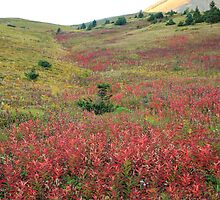 Flower meadow by zumi