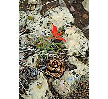 Pine Cone and Flower Photographic Print