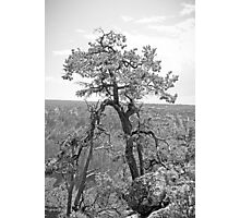 Grand Canyon Tree Study 1  Photographic Print