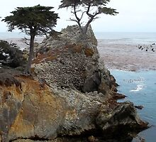 The Lone Cypress At Pebble Beach by Glenn McCarthy