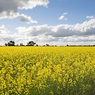 Fields of Gold by Linda Lees
