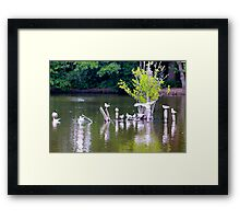Nature at the best Framed Print