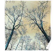 Trees Infrared Nature Poster