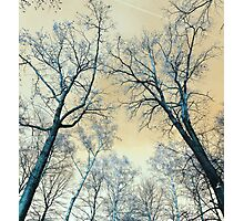 Trees Infrared Nature Photographic Print