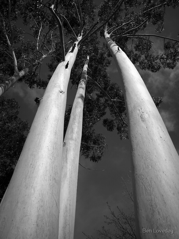 Scary Trees- Mylor by Ben Loveday