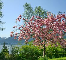 Port Alice Vancouver Island in the Spring by AnnDixon