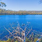 Lake Dobson, Tasmania, Australia #4 by Elaine Teague