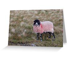 sheep Greeting Card