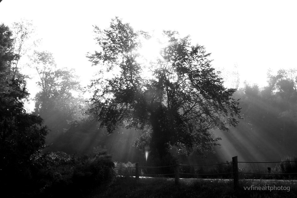 Morning Sunrays and Tree by vvfineartphotog
