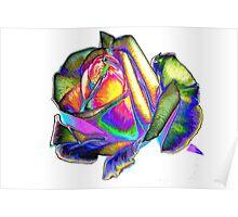 Splendiferous rose Poster