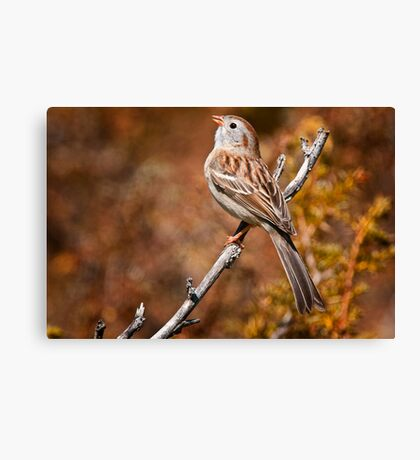 Field Sparrow Canvas Print