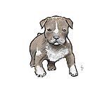 Pitt Bull puppy 2 by Jan Szymczuk
