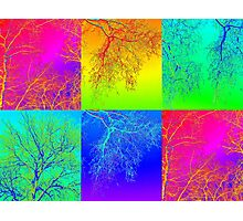 Trees in South Australia - an andy warhol patchwork effect Photographic Print