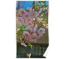 Sakura at Namba Parks Poster