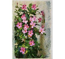 Climbing Pink Photographic Print