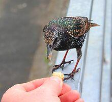 feeding time by bundug