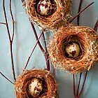 Quail Eggs by bgbcreative