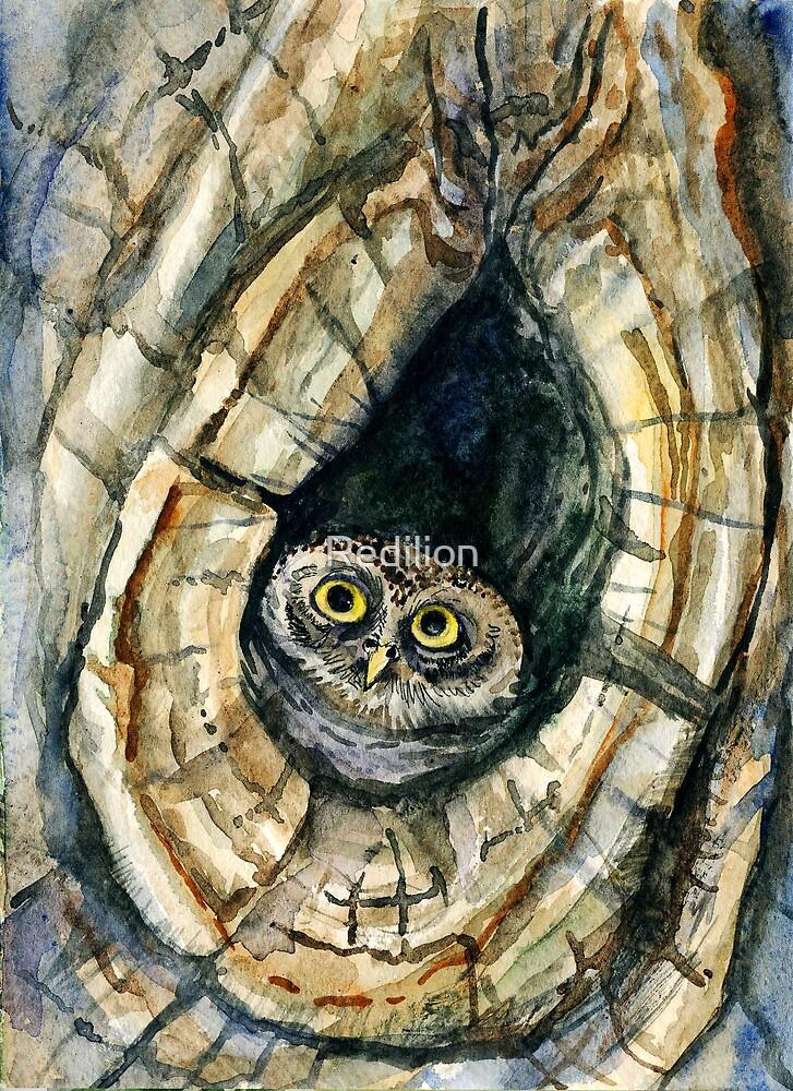 Pygmy owl by Redilion