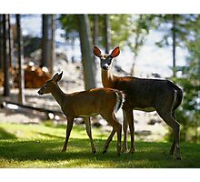 Fawn & Doe Photographic Print